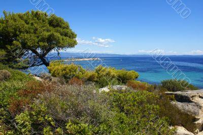 Coastline Of Halkidiki