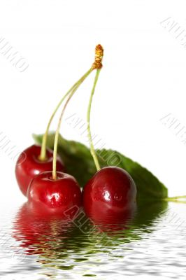 sweet cherry in water