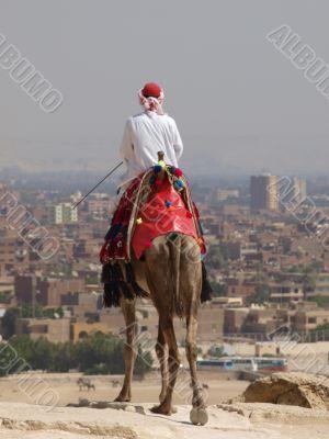 dromedary and camel i kair travell secret