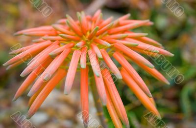 Graceful lonely tropical flower in foliage