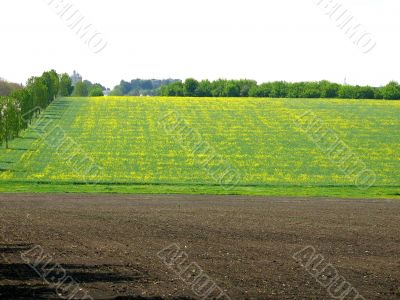 Green and yellow agriculture field