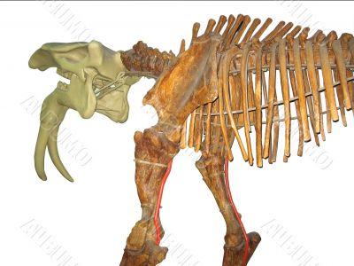 Prehistoric animal skeleton isolated on white