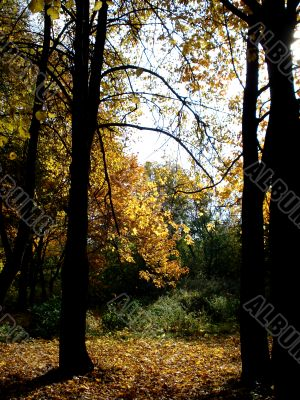 Timber edge of a forest by autumn