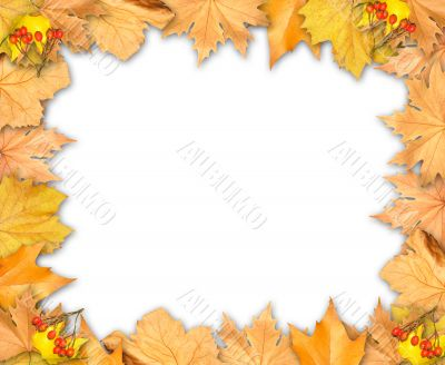 Frame of autumn yellow leaves isolated over white background