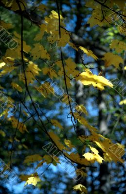 Autumn leaves background-1