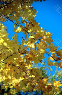 Autumn leaves background-2