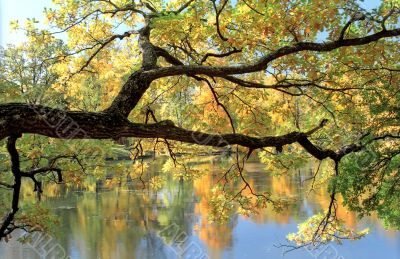 Picturesque tree branch over water