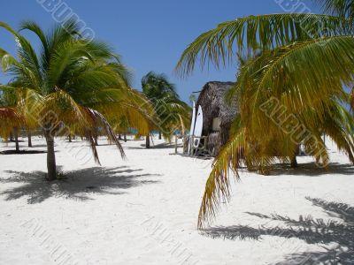 Caribbean Beach, Palms and Surf