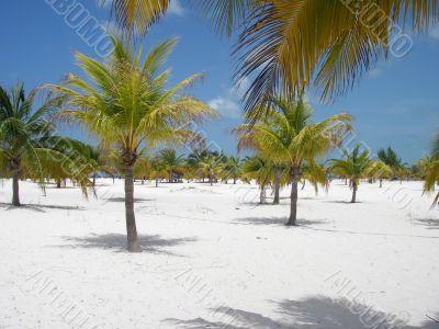 Palm Forest Beach Paradise