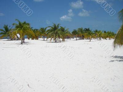 Palm Forest at the Beach Paradise