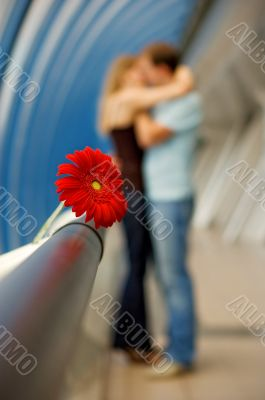 The Lovers and Gerbera