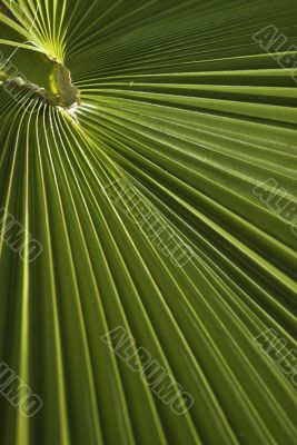 close up of a palm branch