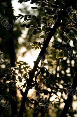 Branch in sun beams