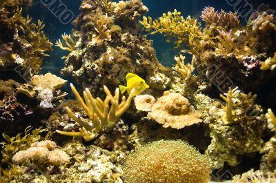 yellow tropic fish