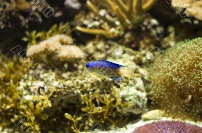 tropic fish in aquarium