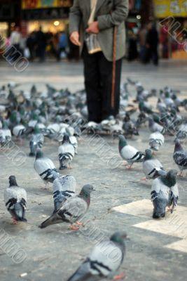 old man feeding doves