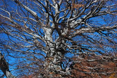 Chaotic tree architecture