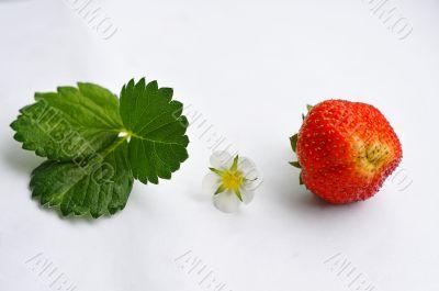 Evolution of strawberries