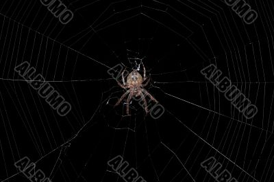 spider in a center of a web