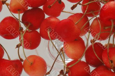 many wet cherry group