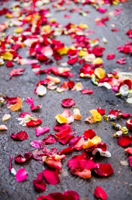 Rose petals wedding on asphalt