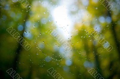 Heart of rain on glass