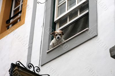 Dog is looking out of the window