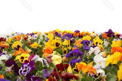 A colorful flower bed.