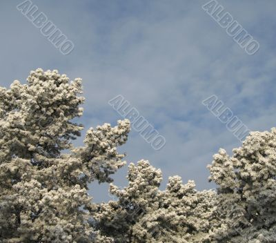 snow on a tree and sky