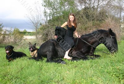 horse laid down, dogs, and teen