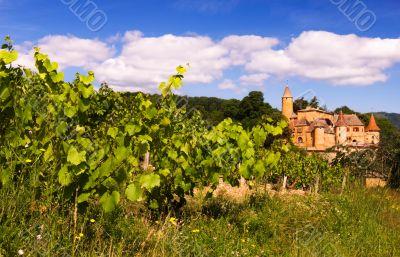 Vineyards in Beaujolais