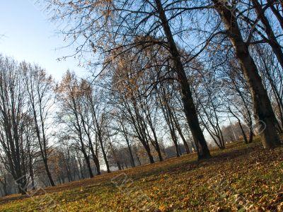 Autumn outdoor landscape