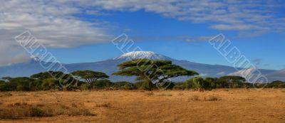 Kilimanjaro Wide