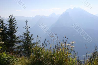 Beautiful bavarian idyll - plants and herbs