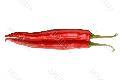 single red pepper