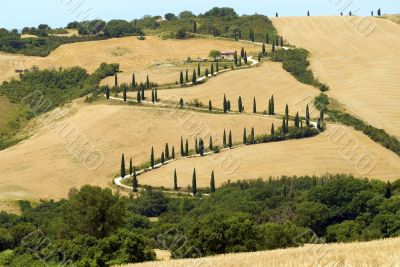 Famous winding road with cypresses in Tuscany