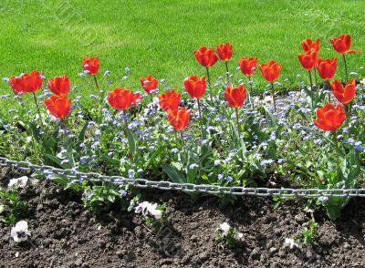 red tulips garden