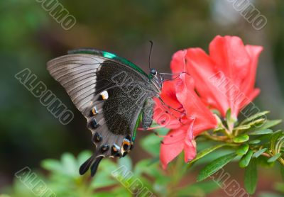 The butterfly and pink flower