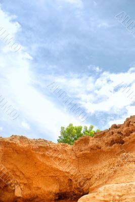 Lone tree growing on side of rocky cliff with Blue sky and cloud
