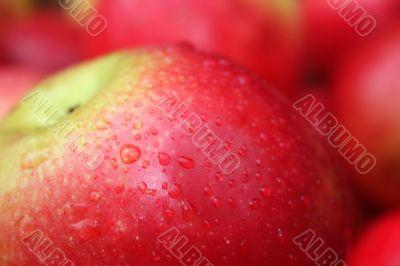 the apple harvest