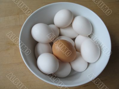 white and brown egg
