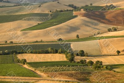 Panoramic view from Montalcino (Siena)