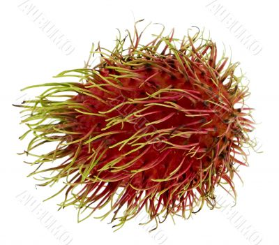 Rambutan, exotic fruit