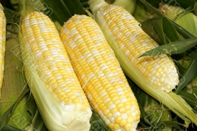 Corn cobs at the market