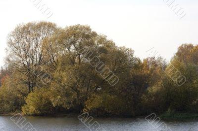 Autumn trees near the lake`s shore
