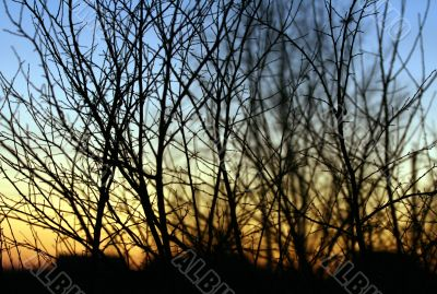 The plant branches in twilight