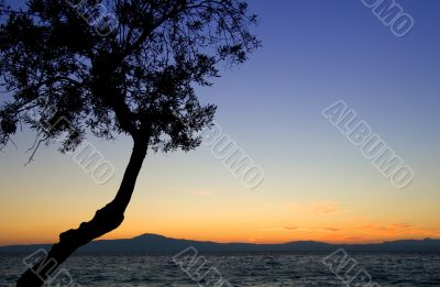 Tree silhouette against sunset