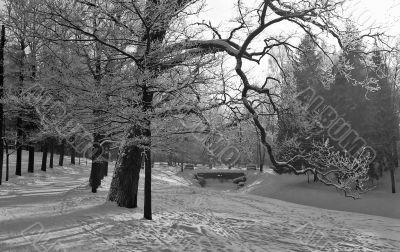Park in winter monochrome