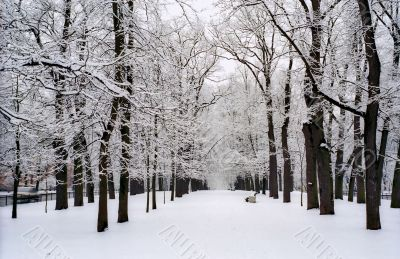 Snow covered trees of avenue