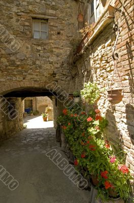 Villa a Sesta (Chianti) - House with plants and flowers
